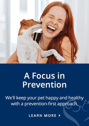 Prevention, Charlotte Vet