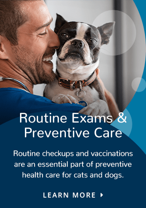 Prevention | Providence Animal Hospital