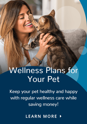 Wellness Plan | Providence Animal Hospital