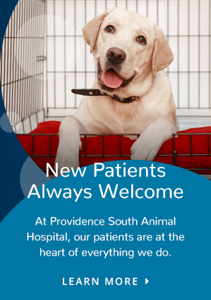 New Patients | Providence South Animal Hospital
