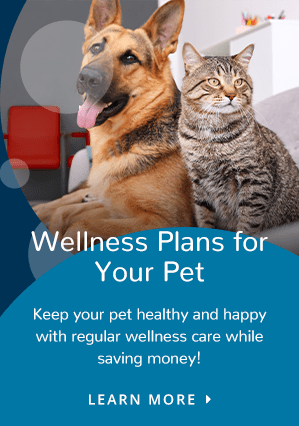 Wellness Plan | Providence South Animal Hospital