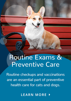 Preventive Care | Providence South Animal Hospital | Waxhaw
