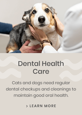 Dental, Huntersville Vet