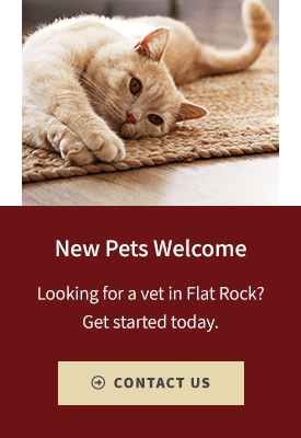 New Patients, Flat Rock Vet