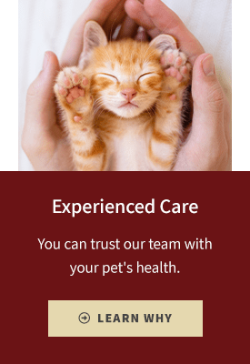 Experienced Care, Flat Rock Vet