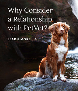 Why Consider a Relationship With PetVet?