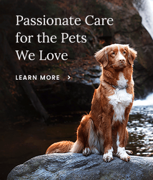 Passionate Care for the Pets We Love