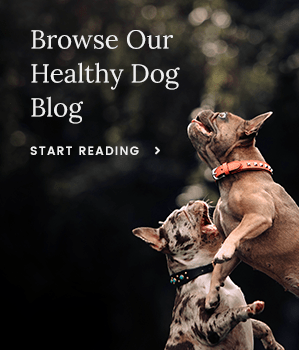 Browse Our Healthy Dog Blog