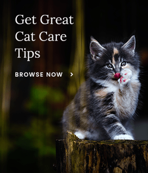 Get Great Cat Care Tips