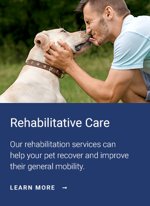 Rehabilitation, West Chester Vet