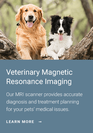 MRI | Veterinary Specialty Center of Tucson, Tucson Vet