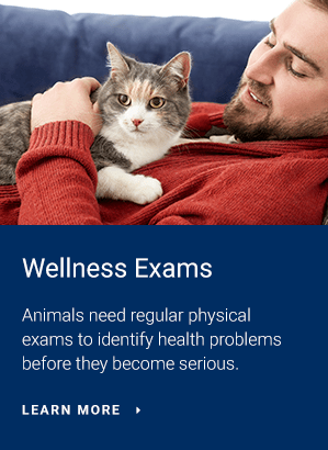 Exams, Baltimore Vet