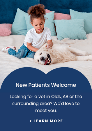 New Patients Olds Pet Clinic | Olds, AB