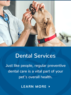 Dental Services, Westport Vet
