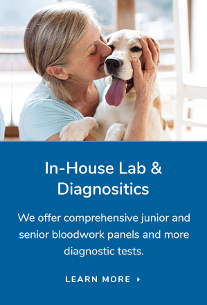 Lab & Diagnostics, Albany Vet