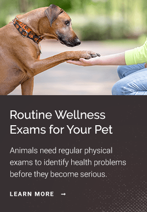 Exams, Seattle Vet