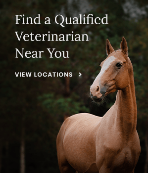 Find a Qualified Vet Near You
