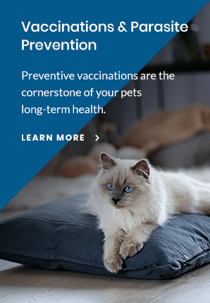 Prevent, Apple Valley Vet