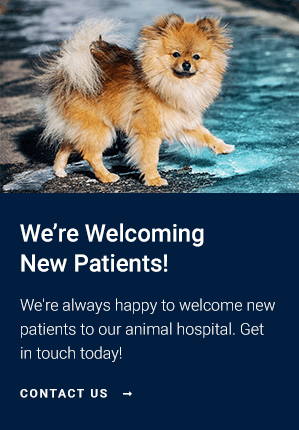 New Patients Johns Creek Veterinary Clinic | Johns Creek Vet