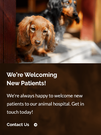 New Patients Miller Clark Animal Hospital | Mamaroneck Vet