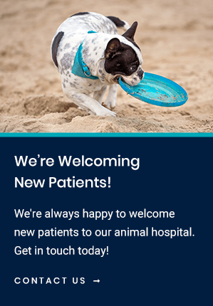 New Patients Torrance Companion Animal Hospital | Torrance Vet