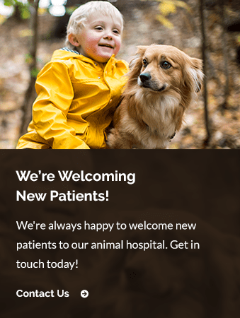 New Patients Valencia Veterinary Center | Santa Clarita Vet