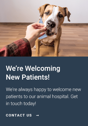 New Patients Brogli, Lane, Weaver & Alexander Animal Hospital | Murfreesboro Vet