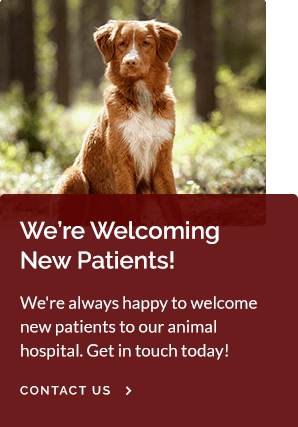 New Patients Paws and Claws Veterinary Hospital | Tracy Vet