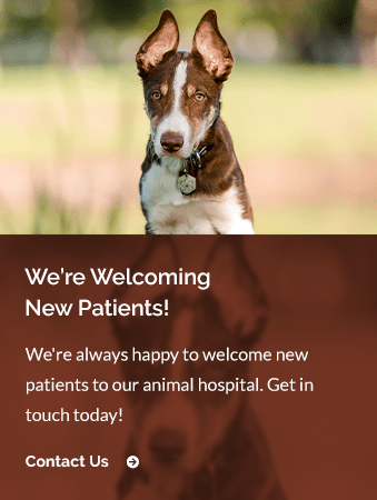 New Patients North Boulder Companion Animal Hospital | North Boulder Vet