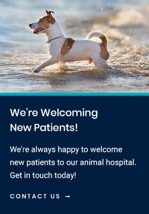 New Patients Crossroads Veterinary Hospital | Gilbert Vet
