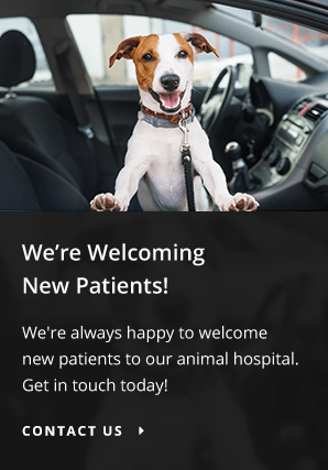New Patients American Pet Clinic | Ceres Vet