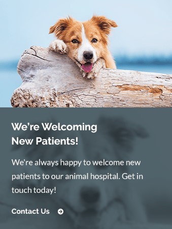 New Patients Angel Animal Hospital | Farmington Hills Vet