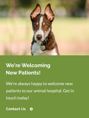 New Patients Fine Animal Hospital | Bedford Vet