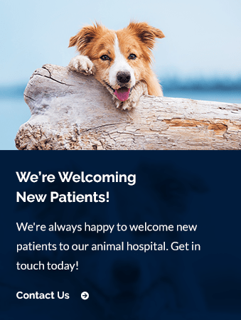 New Patients New England Veterinary Center & Cancer Care | Windsor Vet