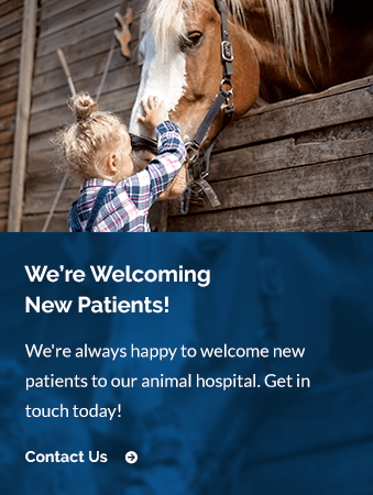 New Patients Argyle Veterinary Hospital | Argyle Vet