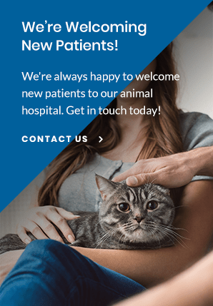 New Patients Paddock Park Animal Care Center | Ocala Vet